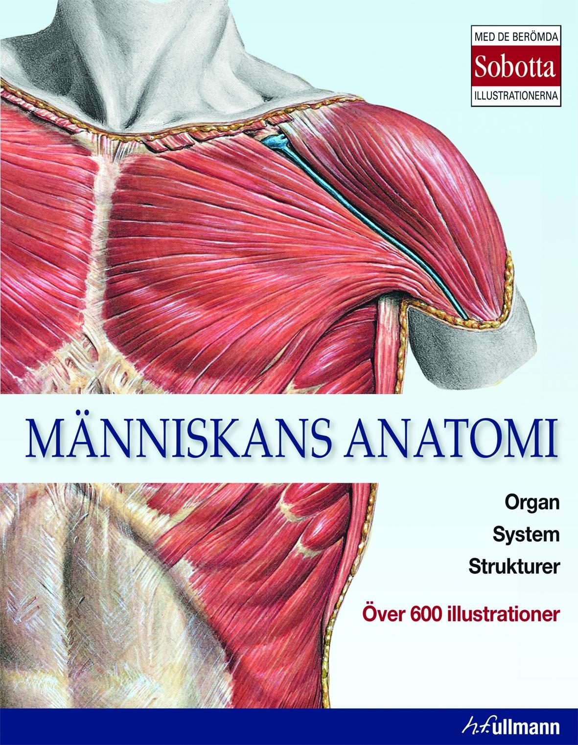 Människans anatomi